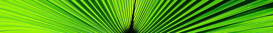 Coast Palms & Cycads