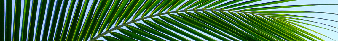 Coast Palms & Cycads