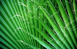 Coast palms