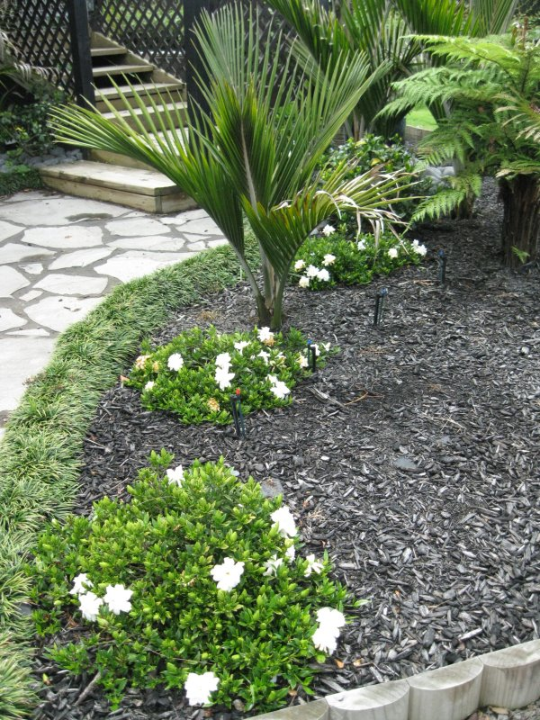 Image Result For Gardenia Plant Sale