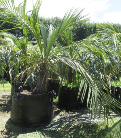 Quito Mountain Coconut 400l ezylift Nov 2018