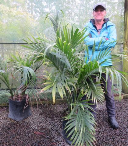 Cascade palm 25 litre bag October 2019