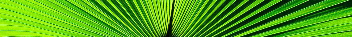 bromeliads plants for sale