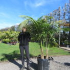 75 litre double planted Kentia