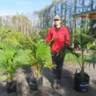 Kentia (with Sally who is 178cm tall) from left 14l multiple planted, 25 litre multi planted, 35l (1)