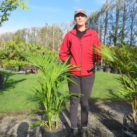 Kentia (with Sally who is 178cm tall) 14l multiple planted
