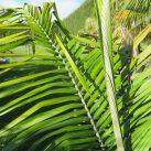 Andean Wax 45l- silver leaf underside detail ($315)